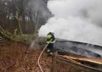 Podpalenie pomnika przyrody w rezerwacie Jar Brynicy